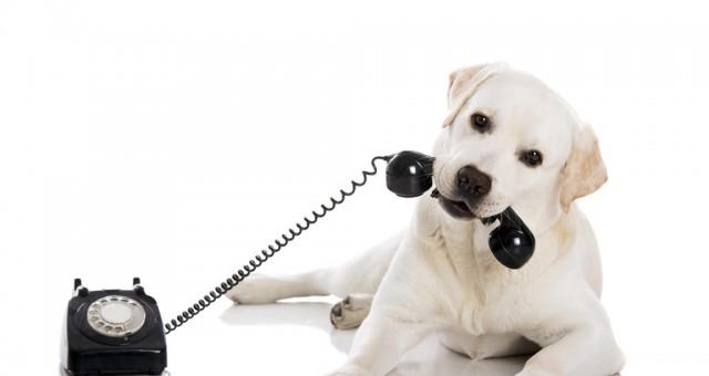 Χρήσιμα τηλέφωνα για ζώα